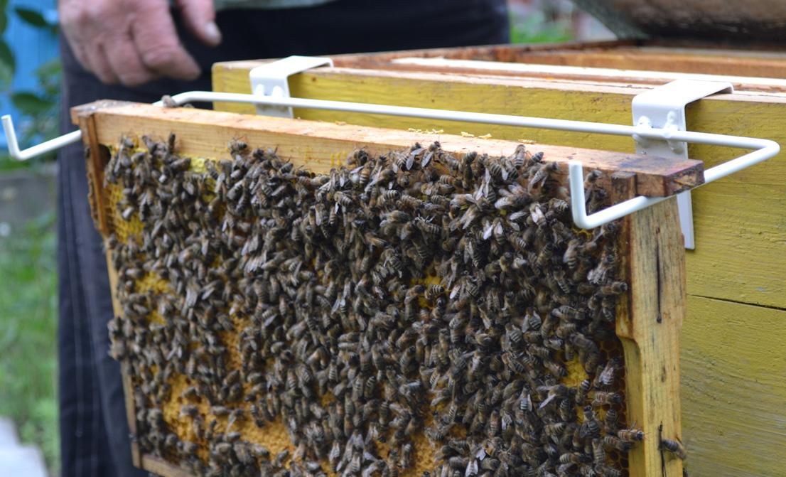 Підставка для бджолиних рамок дозволяє тримати рамки під час огляду бджолиних сімей