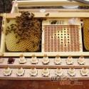 """Система Никот набор """"Nicot-30"""" для выведения маток в пчеловодстве (рис 10)"""