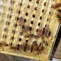 """Система Никот набор """"Nicot-30"""" для выведения маток в пчеловодстве (рис 11)"""