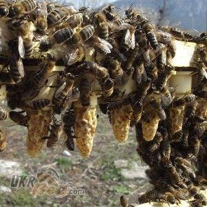 """Система Никот набір """"Nicot-50"""" для виведення маток у бджільництві (мал 6)"""