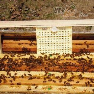 """Система Никот набір """"Nicot-50"""" для виведення маток у бджільництві (мал 7)"""