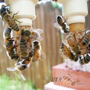"""Система Никот набір """"Nicot-50"""" для виведення маток у бджільництві (мал 9)"""