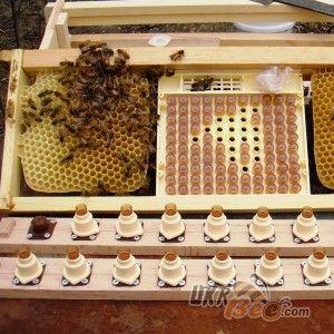 """Система Никот набір """"Nicot-50"""" для виведення маток у бджільництві (мал 10)"""
