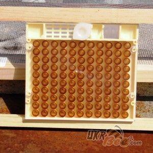 """Система Никот набір """"Nicot-50"""" для виведення маток у бджільництві (мал 12)"""