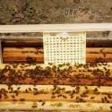 Система Никот 100 - максимальный комплект для для выведения маток в пчеловодстве (мал 8)