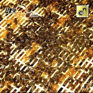 Решетка разделительная Никот (Ганемановская решетка Nicot) на 10 и 12 рамок, рис. 8