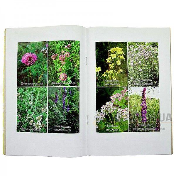 Книга «Основні медоноси і бджолоопилення»