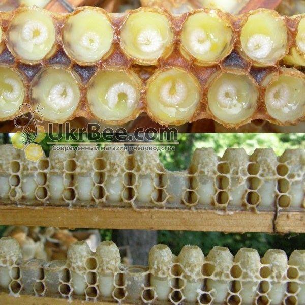 Мисочки в стрічці для маточного молочка (мал 2)