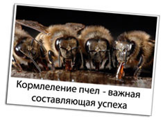 Кормушка для пчел вставляется в леток