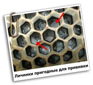 Шпатель для переноса личинок пчел своими руками