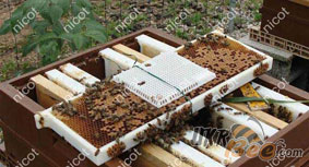 Кліточка для підсадки маток в бджолосім'ю або відводок. Нікот, Франція