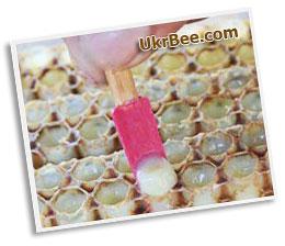 Шпатель из дерева используется в пчеловодстве для сбора ММ (маточного молочка).