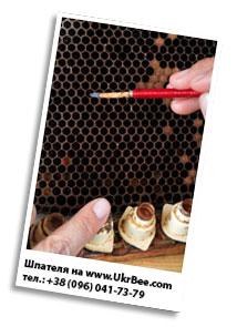 Шпателя для переноса личинок и сбора маточного моловка в интернет-магазине для пчеловодства UkrBee.com
