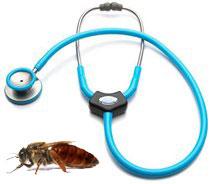 От здоровья пчел зависит производительность в пчеловодстве.