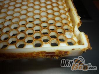 Стільникова сітка Джнтерського соту легко приймається і добудовується бджолами
